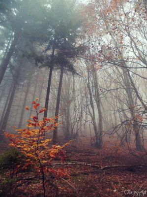Foggy Forest I by Weissglut