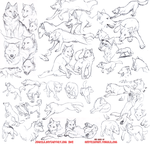 Wolf Study Sketches by Jeakilo