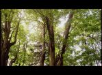 Forest Canopy by Neiot