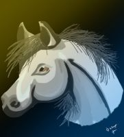 Arabian Horse -realism- by Royal-Dragon
