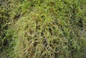 Moss 5 by wolfstockphotos