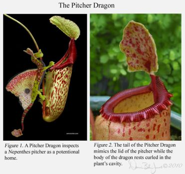 Pitcher Dragon by FamiliarOddlings