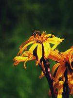 Wasp and Flower by roxxia