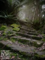 Forest Path - Tasmania by myceliae