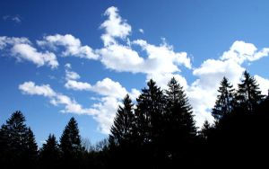 clouds over trees by mathias-erhart