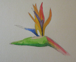 Bird of Paradise by that-cat