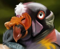 King Vulture by CrimsonSilk