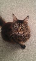 My cat Basse by MagicalPictureMaker