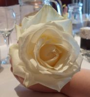 White rose by Birdsatalcatraz