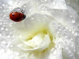 Coccinnelle 6 by eco6org