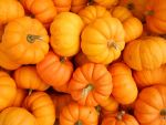 Pumpkin Stock by lost-neverfound
