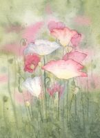 Poppies by louise-art