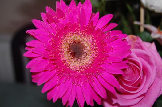 Pink Flower by camho