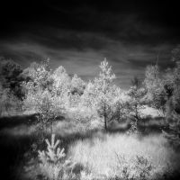 In the swamp_11 by JDV-from-A