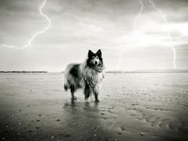 thunderdog by hermio