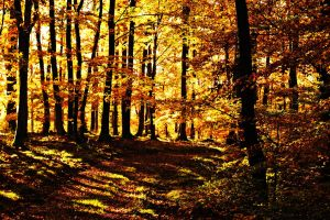 le automne by lostwishes33