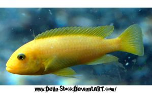Yellow Fishie by Della-Stock