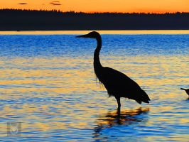 Heron Against Water by wolfwings1