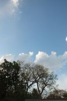 Limbs Brush Clouds by Writer4Him