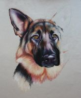 German Shepherd pup WIP01 by corienb