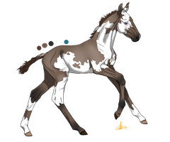 Foal Adoption Points Sold by Equinera