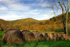 Autumn in West Virginia by TimLaSure
