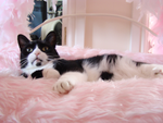 Smudge in awe of Harrods Bed by Kazytc