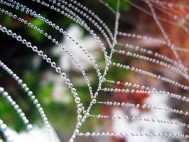 The Spider's Web by SusanRose13