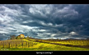 Spring is coming ? by Marcello-Paoli