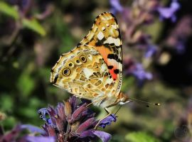 A Butterfly Meal by Heart-Luck