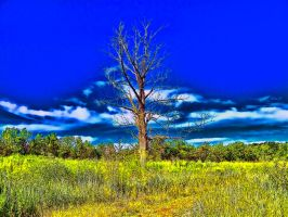 The Dead Tree by RiegersArtistry