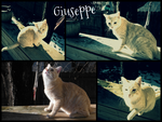 ~Giuseppe~ by CrazyCreation