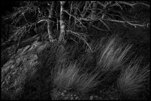 Among the Dead by MarcAdamus