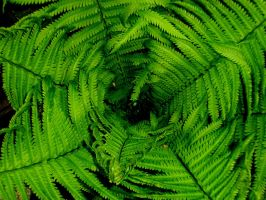 web of fern by NotablePhotography