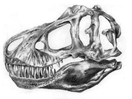 T. rex Skull by camiloandres