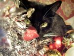 A Christmas Cat by 666GirL666