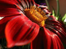 Flor by lil0