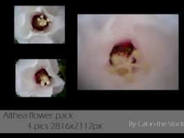 Althea pack by Cat-in-the-Stock