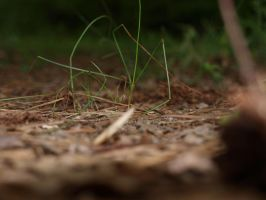 New Camera Shots- Blades of Grass by hourglass-paperboats