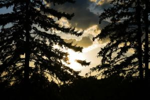 Sunset through the pines by chriskronen