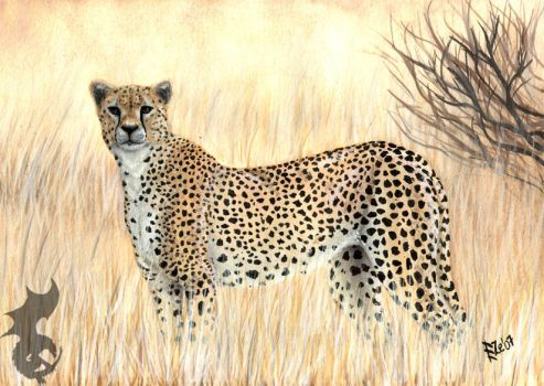 Cheetah by TheWingedShadow