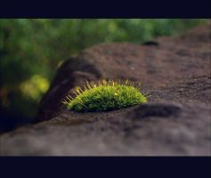Moss by Pathogens