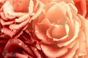 Them Roses by RBSpictures