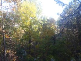Tree's Eye View by irrationalrationale