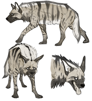 striped hyena by Thylaphlis
