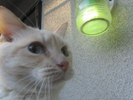 Greenlight A Vet and Cat by GatoIsaCat2002