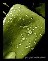 rain drops in green by yuya-yo