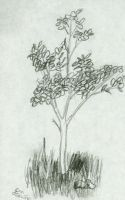 Study of A Young Tree by samtrevino0