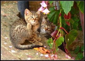Two Brothers by kanes