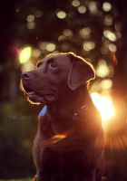 Flare Dog by FreyaPhotos